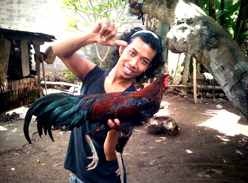 Pulu and my 75,000 Rupiah Rooster