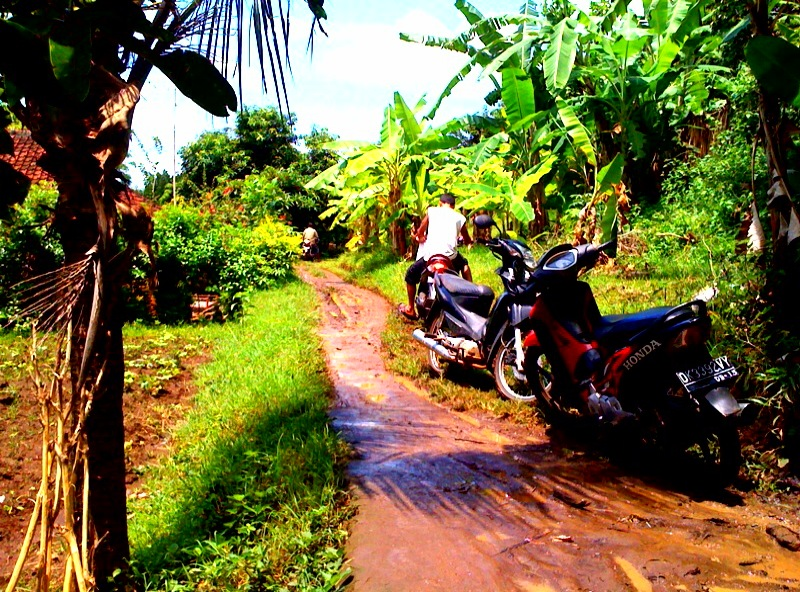 Mud Track into the Jungle