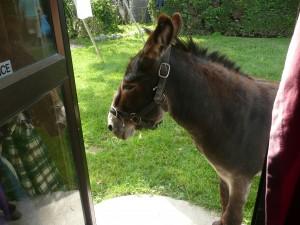 Kaikoura Donkey