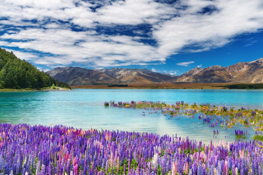 Lake Tekapo, New Zealand (South Island)